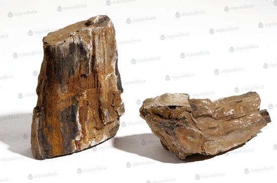 Fosselized wood