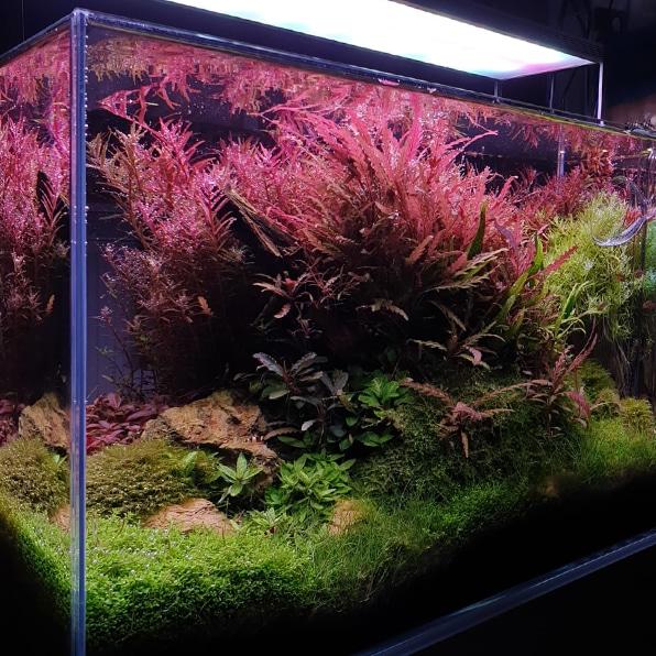 APT Complete voeding voor aquariumplanten
